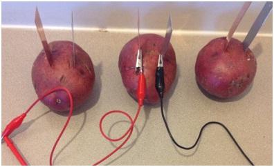 miniscience com potato battery